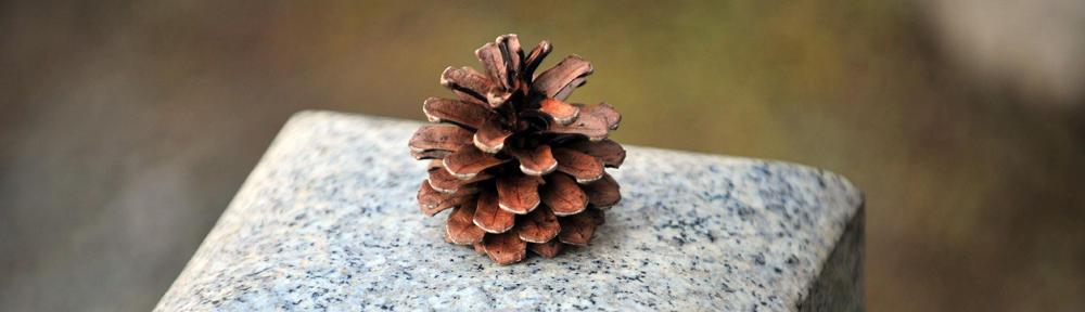 amaripromises